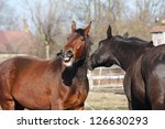 brown horse laughing about... | Shutterstock . vector #126630293