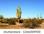 saguaro cactus cereus giganteus ... | Shutterstock . vector #1266304930