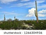 saguaro cactus cereus giganteus ... | Shutterstock . vector #1266304936