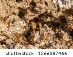 Ants In An Anthill