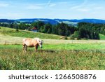 beautiful scenery with a horse  ...   Shutterstock . vector #1266508876