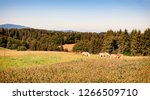 beautiful scenery with a horse  ...   Shutterstock . vector #1266509710