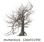 dead tree isolated on white... | Shutterstock . vector #1266511540