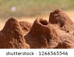 Closeup Of An Ant Hills Or Ant...