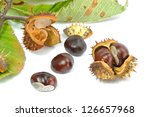 Small photo of Wild Chestnut or Horse Chestnut - Aesculus hippocastanum - venous circulatory failure medication