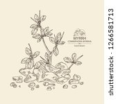 myrrh  plant and resin of myrrh.... | Shutterstock .eps vector #1266581713