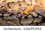 python performed in community... | Shutterstock . vector #1266592963
