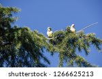 monk parakeet also known as... | Shutterstock . vector #1266625213