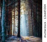 sunlight in the grey forest ... | Shutterstock . vector #126685304