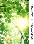 abstract blurred spring green...   Shutterstock . vector #126693908