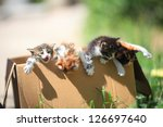 Stock photo little kittens get out of a cardboard box 126697640