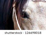sorrel horse   Shutterstock . vector #126698018