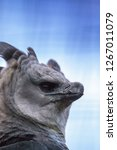 harpy eagle harpia harpyja...   Shutterstock . vector #1267011079