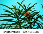 a view of a plant with very... | Shutterstock . vector #1267118689