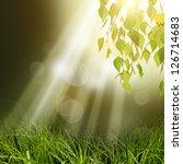 Green Tree Leafs At Under Sun...