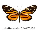 Stock photo butterfly lycorea ceres isolated on white background 126726113