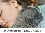 british short hair cat sleeping ... | Shutterstock . vector #1267371076