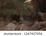 day trip in dahab  egypt | Shutterstock . vector #1267427056