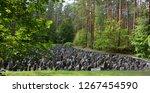 bikenieki riga lavtia 09 17...   Shutterstock . vector #1267454590