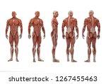 3d rendering   a standing male... | Shutterstock . vector #1267455463