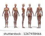 3d rendering  a  standing... | Shutterstock . vector #1267458466