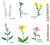 flower of saint johns wort ... | Shutterstock .eps vector #1267459579