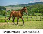 young aristocratic reddish...   Shutterstock . vector #1267566316