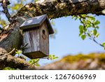 Birdhouse on tree at springtime....