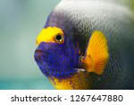 yellow mask or blueface... | Shutterstock . vector #1267647880