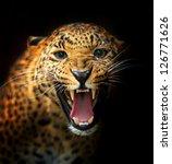 portrait of a leopard | Shutterstock . vector #126771626