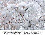 tree birch branches under snow | Shutterstock . vector #1267730626