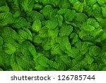 mint leaves background. | Shutterstock . vector #126785744
