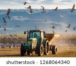 feeding of gray cranes ... | Shutterstock . vector #1268064340