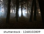 night fog among the trees. | Shutterstock . vector #1268102809