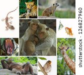 animal theme collage composed... | Shutterstock . vector #126827960