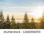 Oregon Forest Sunrise