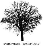 cutout tree vegetation... | Shutterstock . vector #1268340019