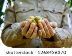 summer vegetable garden concept ... | Shutterstock . vector #1268436370