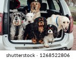 The Dogs In The Car Sit...