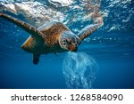 Stock photo water environmental pollution problem underwater animal sea turtle eating plastic 1268584090