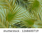 seamless tropical palm leaves... | Shutterstock . vector #1268600719