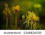 freaky flowers with mystic...   Shutterstock . vector #1268826520