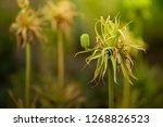 freaky flowers with mystic...   Shutterstock . vector #1268826523