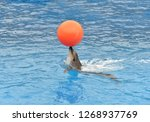 Dolphins Playing With Ball