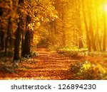 Sunrise In Autumn Forest. Tilt...