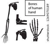 human hand  wrist  fingers ... | Shutterstock .eps vector #1269070189