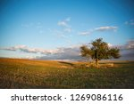 solitaire tree in the middle of ... | Shutterstock . vector #1269086116