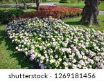 bush of colorful flowers in the ... | Shutterstock . vector #1269181456