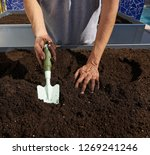 Small photo of Farmer man hands dirty on substratum of urban garden orchard in raised bed