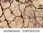 the dried up cracked earth with ...   Shutterstock . vector #1269262216